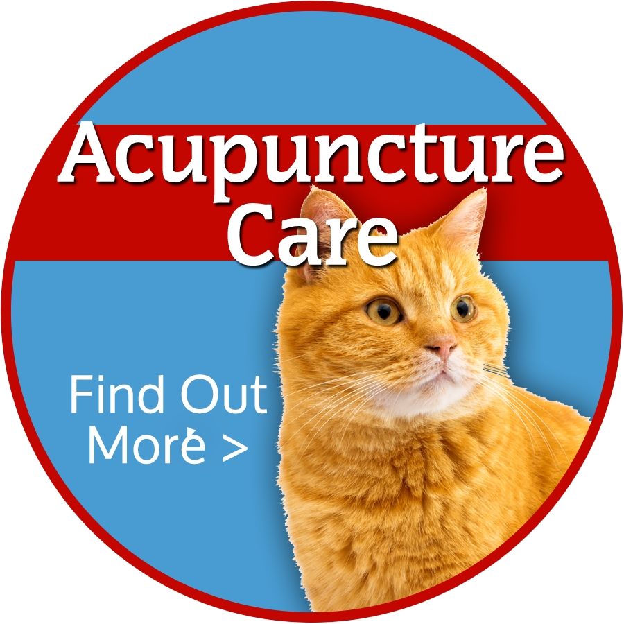 Colorado Springs Animal Acupuncture