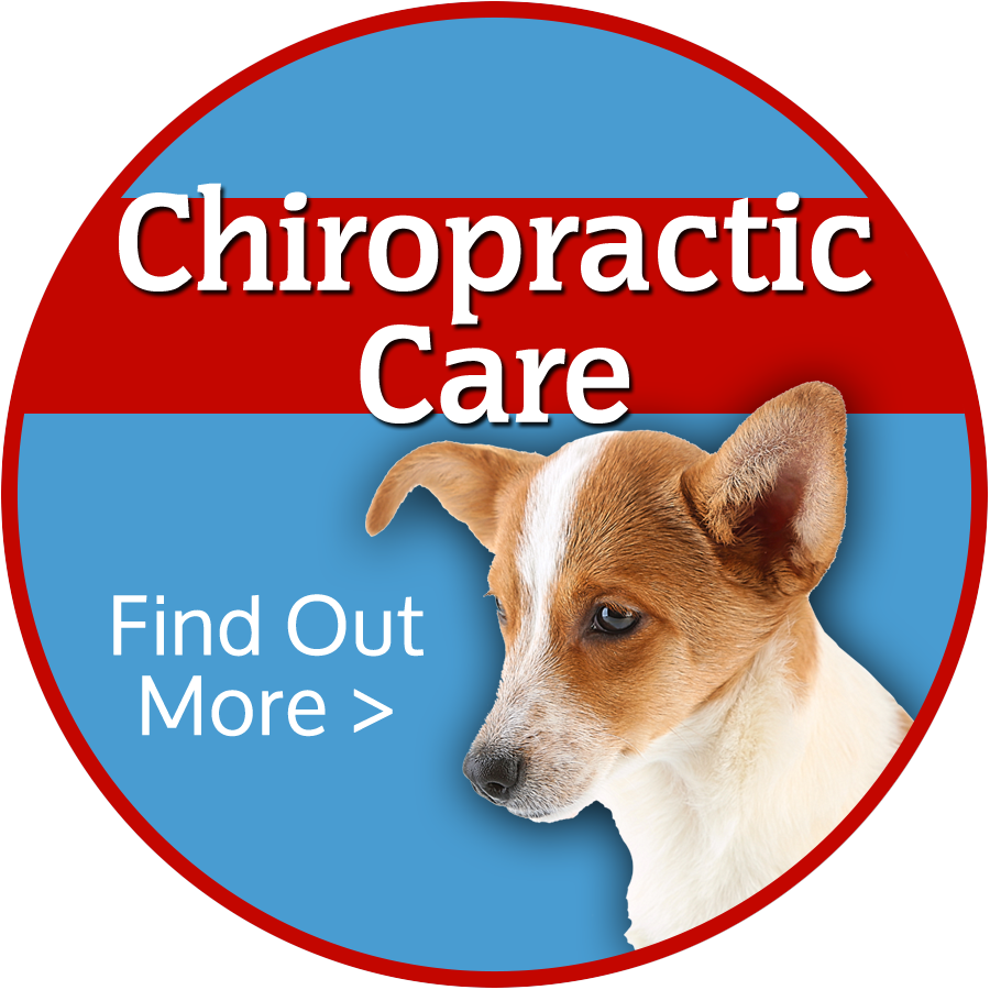 Colorado Springs Animal Chiropractic Care